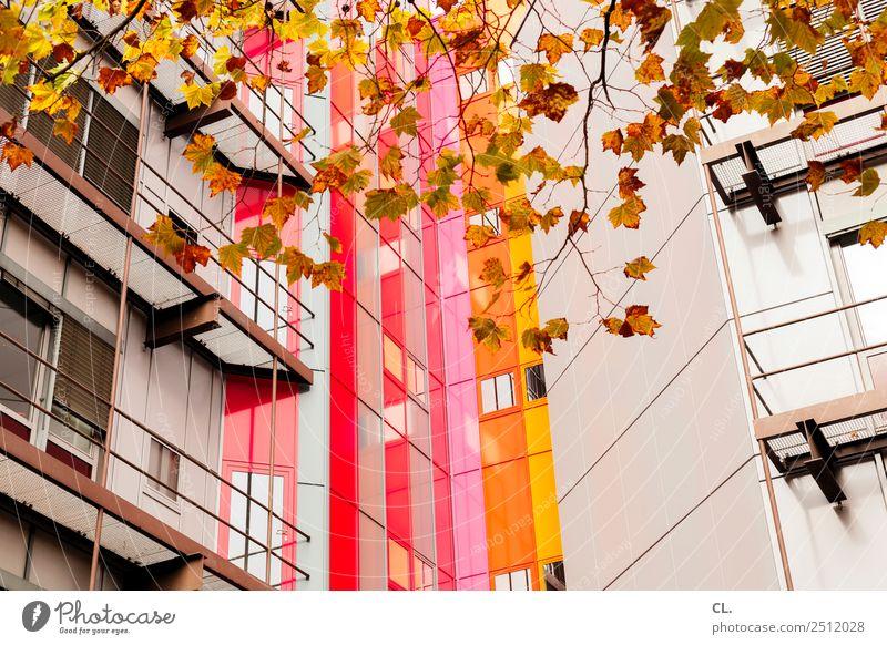 autumn high house Education Academic studies Autumn Leaf Essen Town High-rise Manmade structures Building Architecture Facade Multicoloured Colour Complex