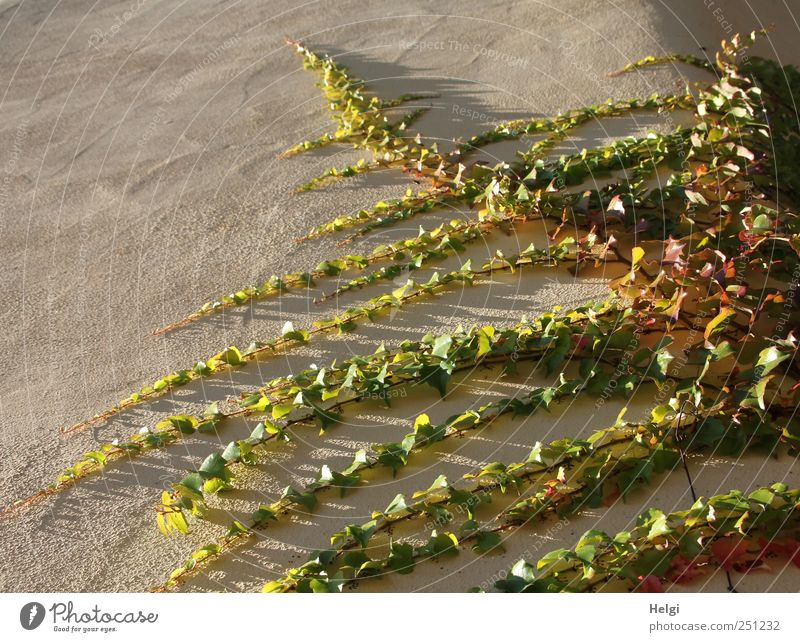 Nature Green Plant Leaf Yellow Wall (building) Environment Gray Wall (barrier) Brown Esthetic Natural Growth Authentic Change Uniqueness