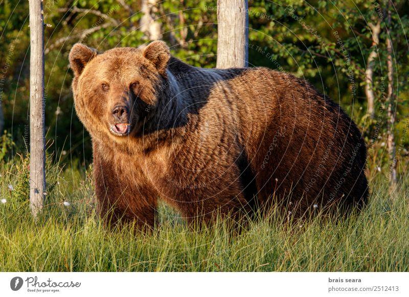 Brown Bear Adventure Biologist Hunter Environment Nature Animal Earth Forest Wild animal Brown bear 1 Love of animals Fear Environmental protection wildlife