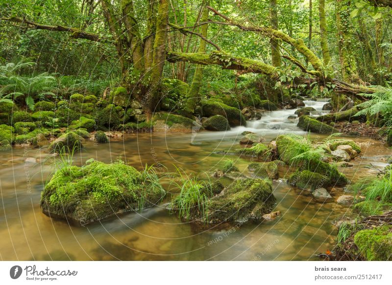 River through green forest Vacation & Travel Adventure Freedom Expedition Mountain Science & Research Environment Nature Landscape Plant Elements Water Spring
