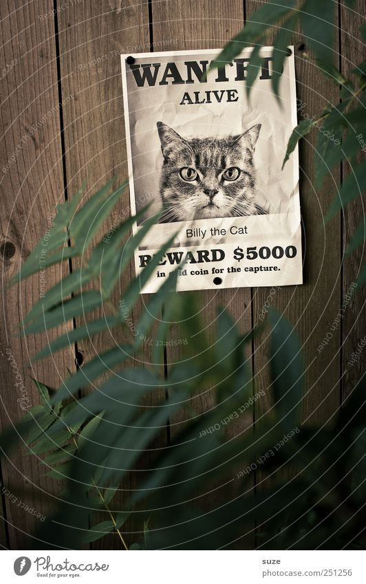 *1,600* Billy the Cat Plant Animal Leaf Paper Exceptional Funny Green Advertising Search Image Manhunt Bounty Wooden wall Wall (building) fact sheet Poster Miss