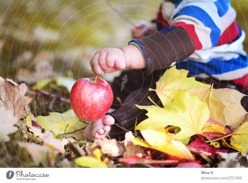 Child Human being Nature Hand Red Meadow Nutrition Autumn Food Baby Sweet Cute Apple Toddler Harvest Delicious