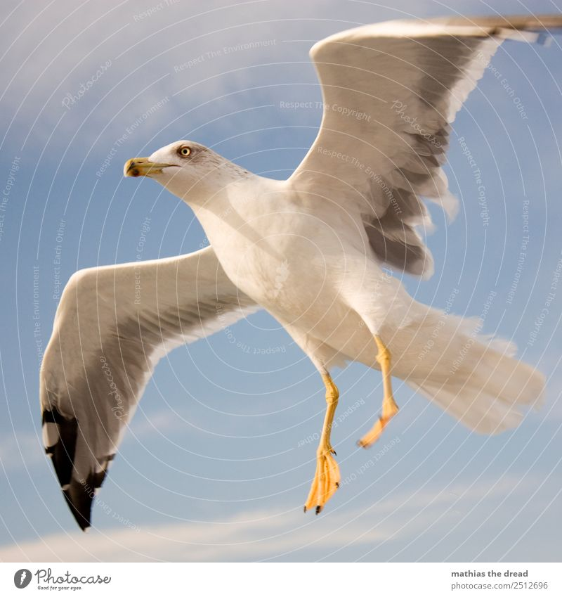 seagull Sky Clouds Animal Bird 1 Flying Scream Esthetic Wild Wing Feather Beak Landing Glide White Yellow Colour photo Exterior shot Close-up Deserted