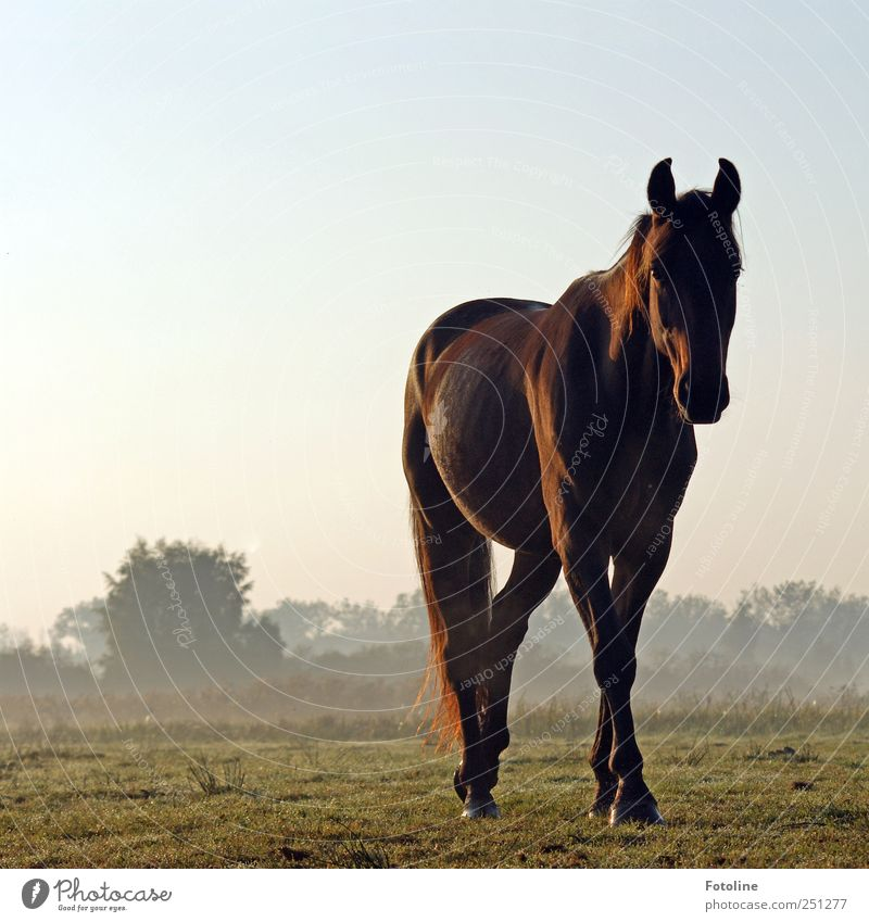 Sky Nature Plant Animal Meadow Environment Landscape Grass Brown Fog Natural Bushes Horse Animal face Pelt Pet