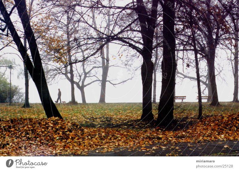 Human being Tree Leaf Autumn Dog Landscape Fog