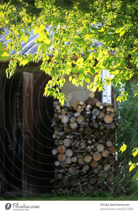 Nature Tree Plant Leaf Calm Wood Garden Glittering Lie Energy industry Bushes Round Illuminate Warm-heartedness Serene Beautiful weather