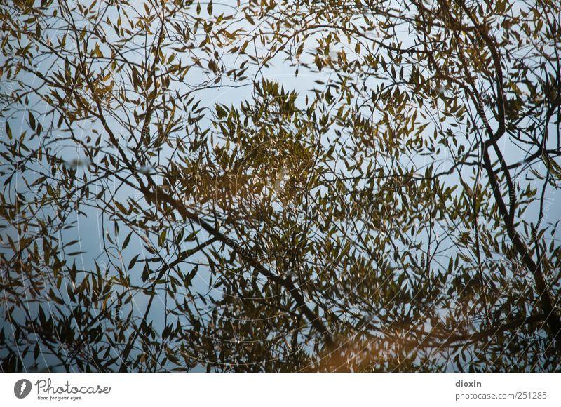 [CHAMANSÜLZ 2011] Aquatic plant Water Plant Tree Bushes Leaf Branch Park Lake River Wet Natural Nature Reflection Pattern Colour photo Exterior shot