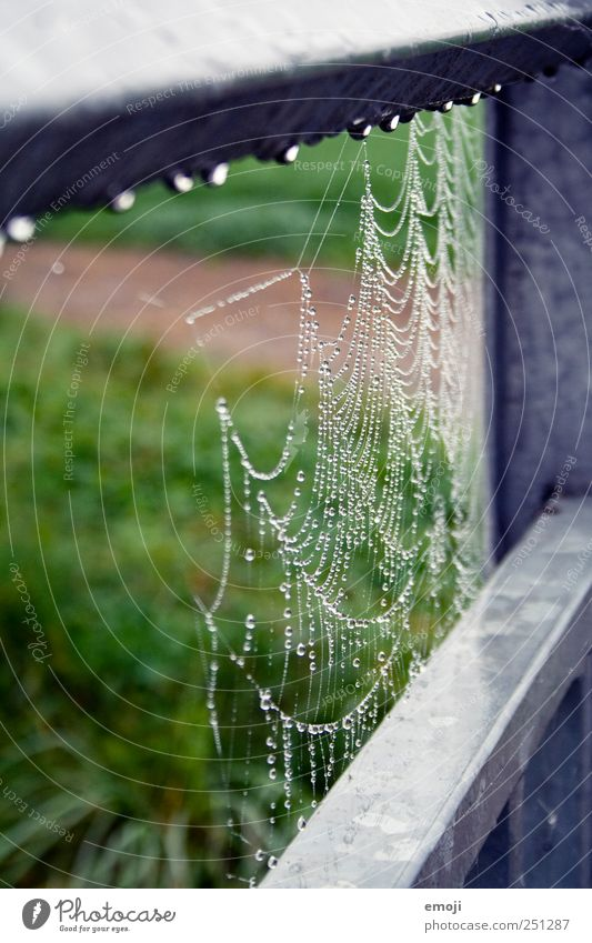 spin and drip Environment Nature Drops of water Bad weather Wet Natural Green Handrail Spider's web Colour photo Exterior shot Close-up Detail