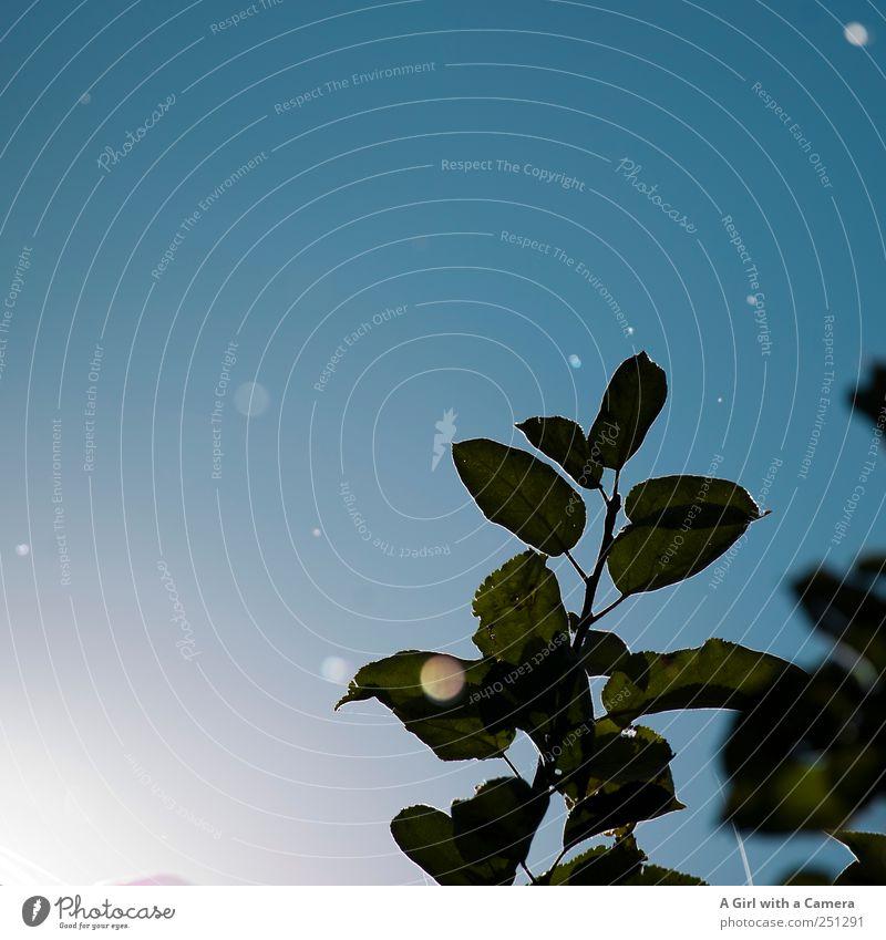Nature Blue Beautiful Plant Leaf Garden Movement Fly Flying Fresh Happiness Illuminate Friendliness Point Beautiful weather