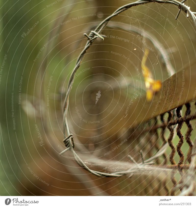 barbed wire spiral Metal Rust Old Point Safety Protection Colour photo Exterior shot Experimental Deserted Day Shallow depth of field Central perspective