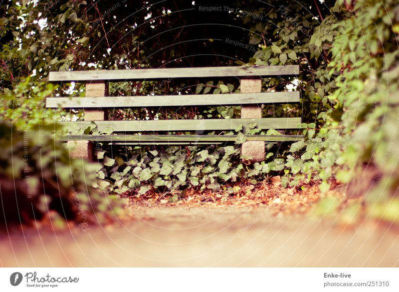 Nature Green Calm Garden Sand Moody Brown Sit Bushes Hope Grief Simple Longing Pain Discover To enjoy