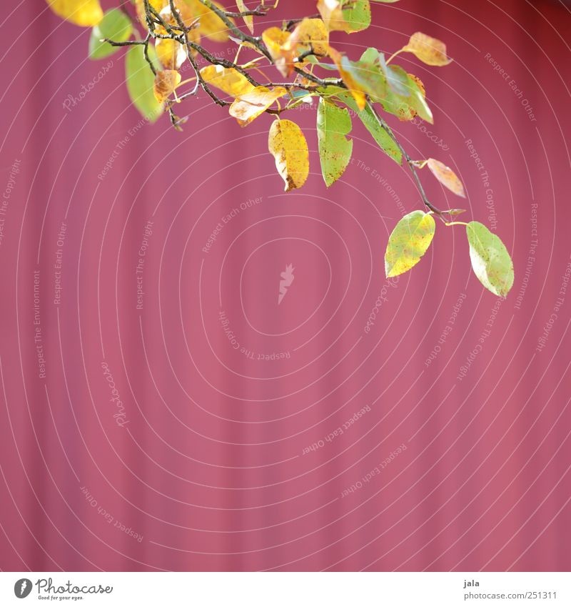 Nature Green Beautiful Plant Red Leaf Yellow Autumn Environment Natural
