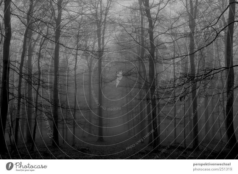 forest Nature Landscape Winter Fog Tree Forest Esthetic Threat Cold Natural Black White Emotions Power Longing Freedom Life Moody Death Infinity