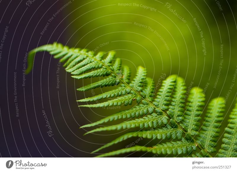 Fern, but fern Environment Nature Plant Leaf Foliage plant Wild plant Meadow Authentic Green fanned out Hang wag Colour photo Subdued colour Exterior shot