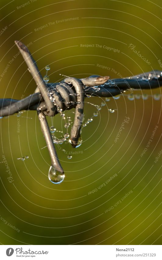 Water Green Gray Metal Rain Wet Drops of water Fence Border Dew Block Thorny Close Knot Barbed wire