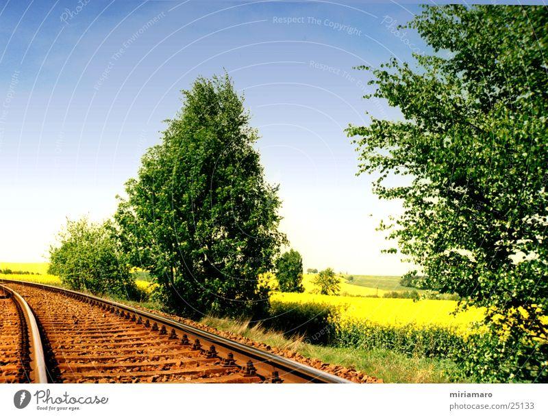 With the railway through the rape field Summer Canola field Tree Colour Sky