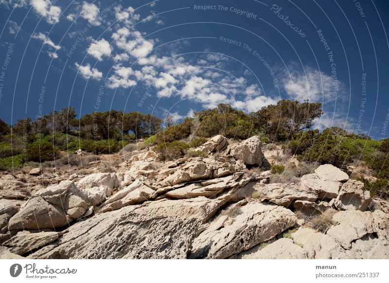 holiday photo Landscape Sky Clouds Beautiful weather Tree Stone pine Rock Mountain Peak Sardinia Authentic Natural Perspective Vacation & Travel Colour photo