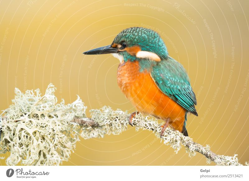 Kingfisher perched on a branch Nature Blue Beautiful Colour Green White Animal Adults Environment Natural Bird Wild Park Europe Feather Photography