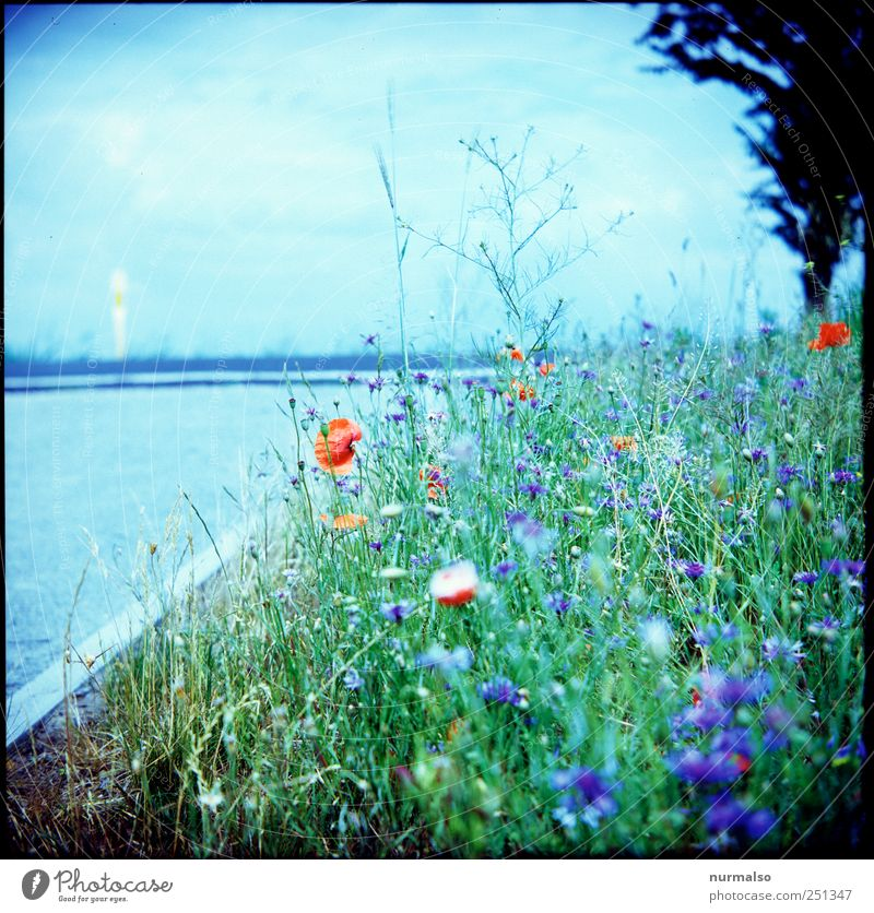 Nature Beautiful Plant Flower Animal Environment Street Grass Moody Leisure and hobbies Natural Authentic Growth Lifestyle Pure Beautiful weather