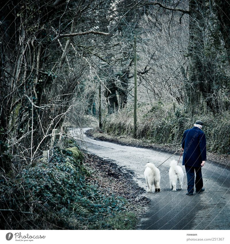 Sunday stroll Mountain Hiking Masculine Male senior Man Senior citizen 1 Human being 60 years and older Nature Tree Forest Dog 2 Animal Moody Love of animals