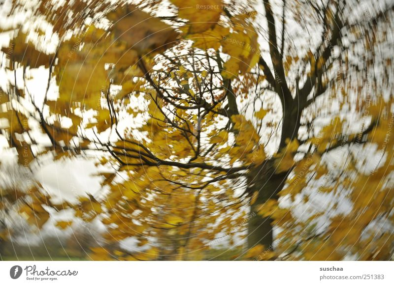 My world: twisted. Environment Nature Landscape Air Sky Autumn Climate Climate change Weather Wind Gale Tree Wood Dark Yellow Gold Movement rotation leaves