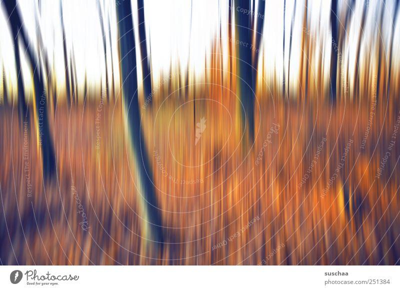 Sky Nature Forest Autumn Environment Landscape Climate Exceptional