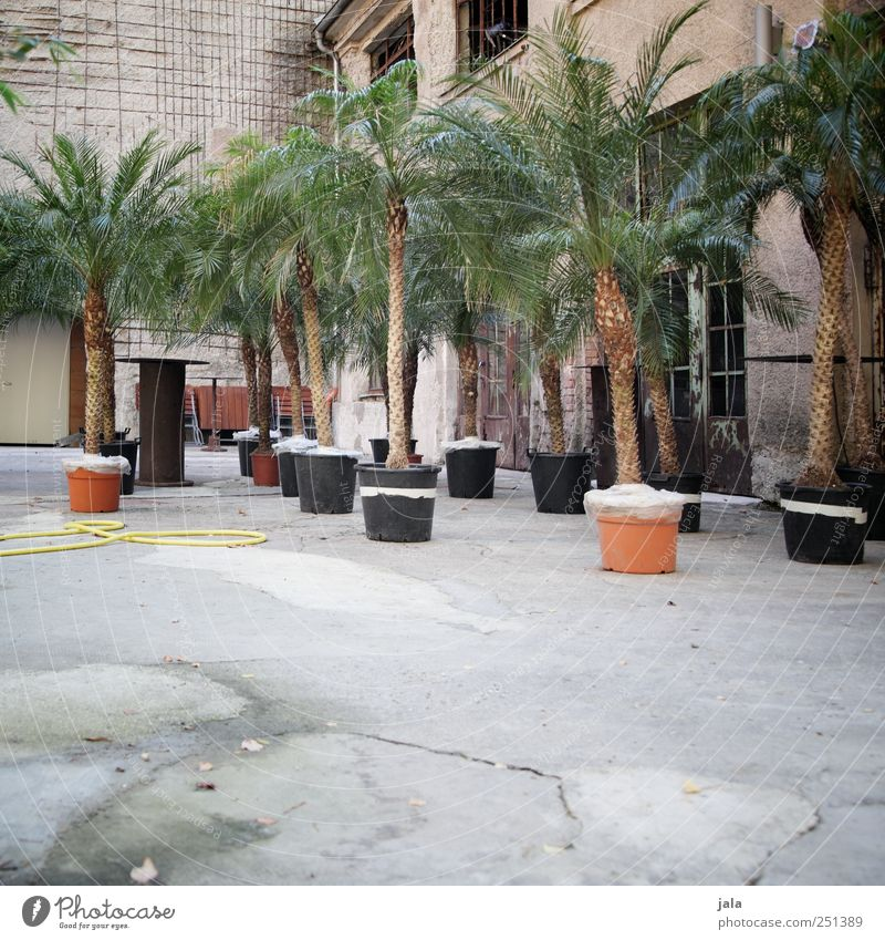 Plant House (Residential Structure) Wall (building) Wall (barrier) Building Facade Places Gloomy Manmade structures Factory Palm tree Tree Pot plant