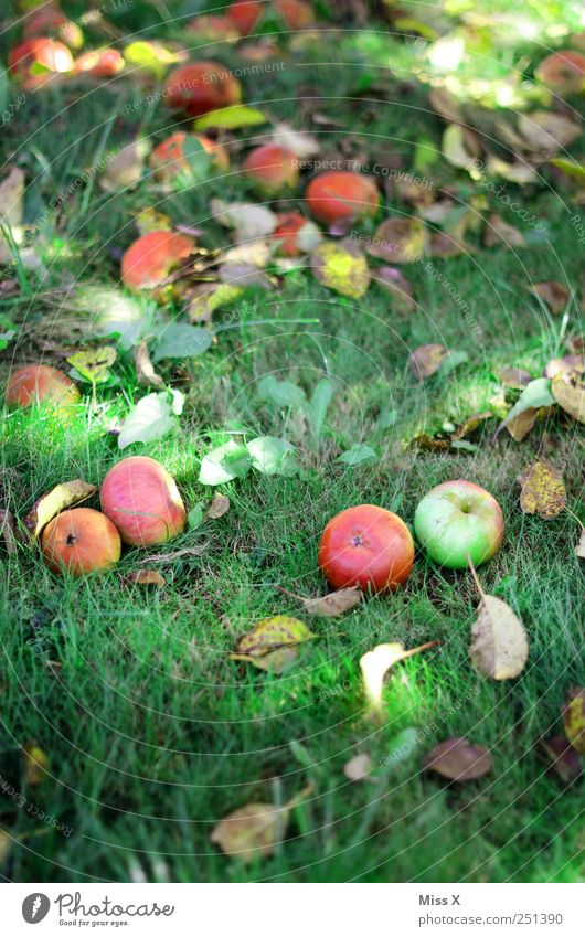 Red Leaf Meadow Autumn Grass Food Sweet Round Apple To fall Harvest Delicious Organic produce Juicy Autumn leaves Apple tree