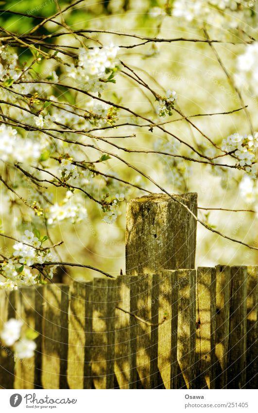 Kossen leaf 4 Spring tree blossom Fence Tree Branch Twig Wood Deserted White