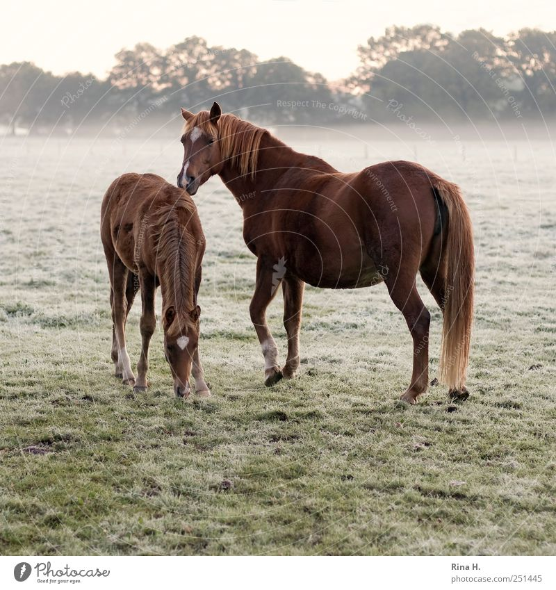 Nature Animal Landscape Baby animal Natural Fog Observe Horse To feed Pet Animal family Foal