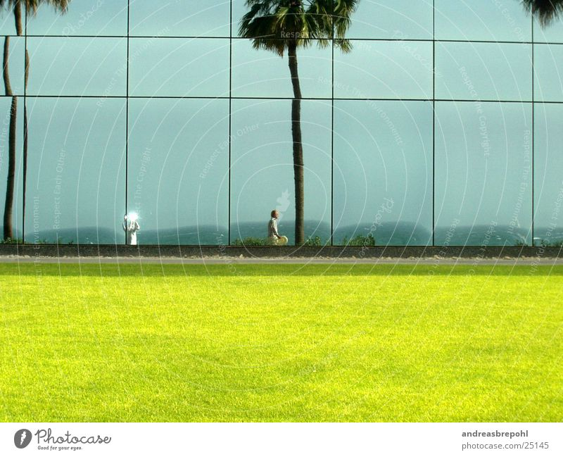 Sun Wall (building) Window Lawn Mirror Palm tree Mirror image