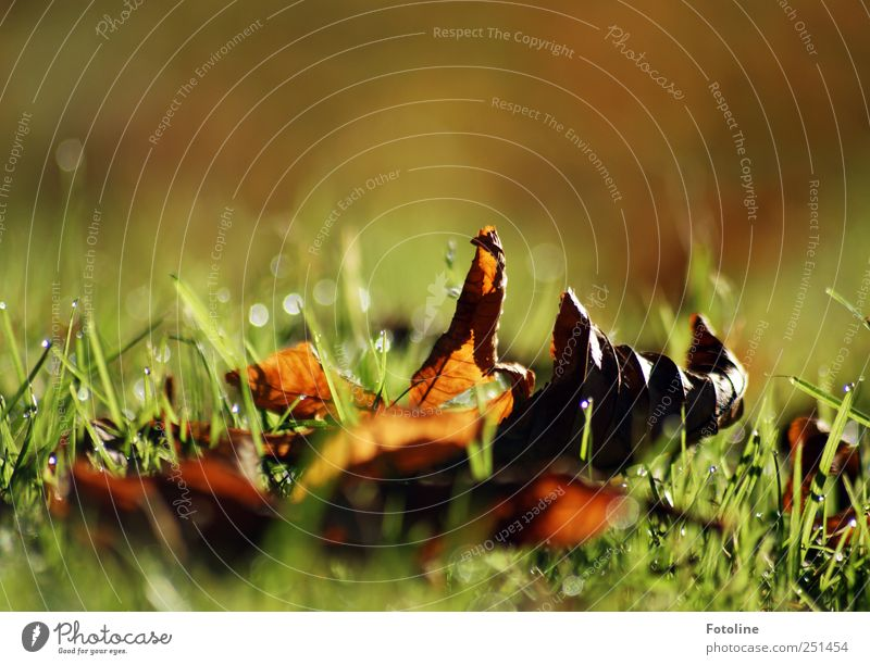 Autumn is here! Environment Nature Plant Grass Leaf Meadow Bright Natural Brown Green Shriveled Colour photo Multicoloured Exterior shot Close-up Copy Space top