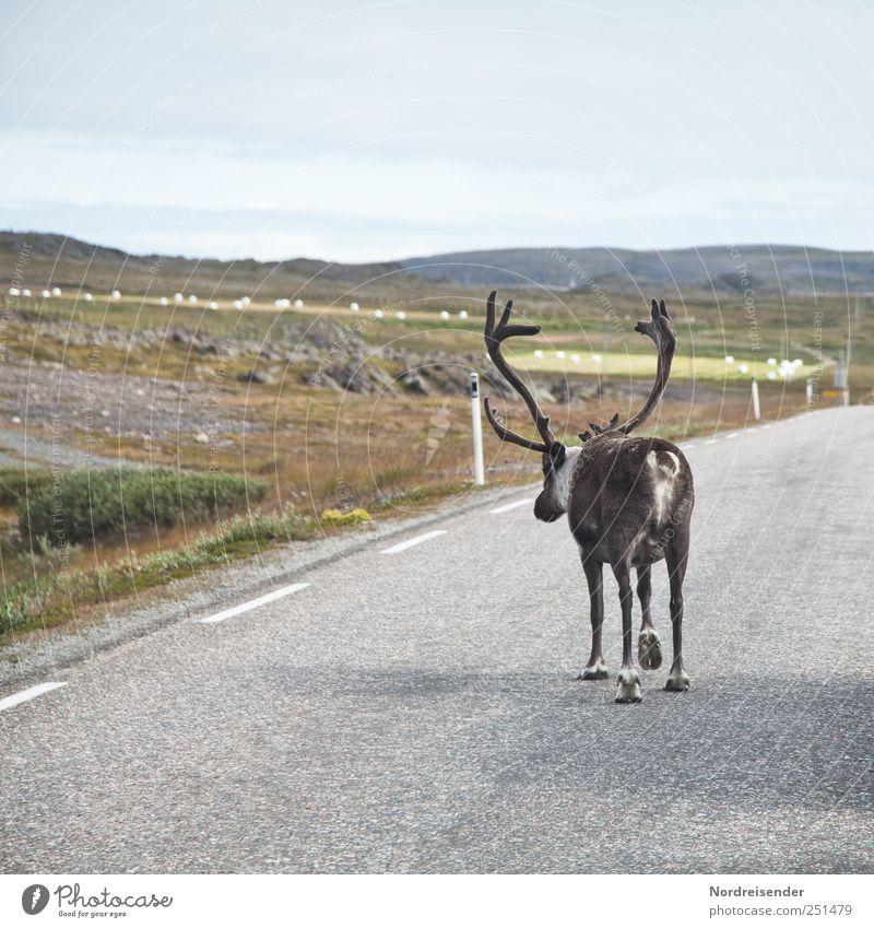 Rudi Ratlos Vacation & Travel Nature Landscape Animal Transport Road traffic Motoring Street Lanes & trails Farm animal Wild animal 1 Walking Hiking Exceptional