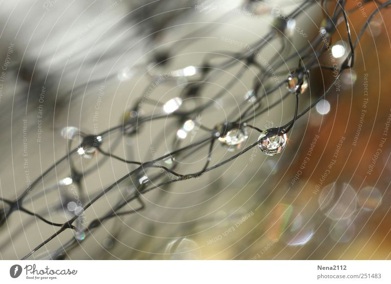Captured drops Environment Nature Water Drops of water Wet Net Reticular Dew Rain Round Damp Sphere Colour photo Exterior shot Close-up Detail