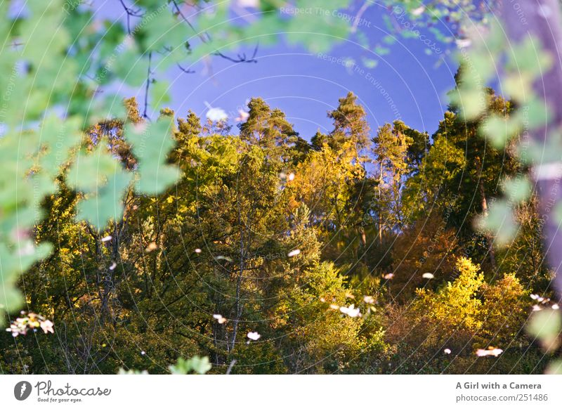 Chamansülz - reflecting Environment Nature Plant Sky Cloudless sky Autumn Weather Beautiful weather Tree Leaf Forest River bank Illuminate Calm Multicoloured