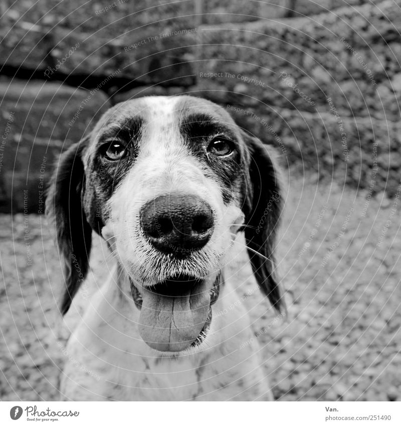 doggie Contentment Nature Animal Pet Dog Animal face Pelt 1 Together Black White Happiness Loyal Love of animals Friendship Breathe Tongue Nose