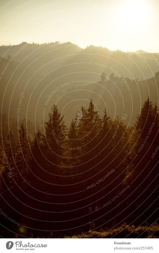 Nature Summer Calm Forest Autumn Environment Mountain Landscape Gold Fog Hill Kitsch Alps Idyll Switzerland Beautiful weather
