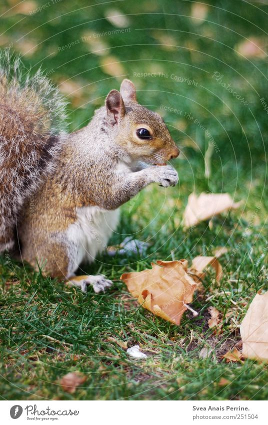 Mjam. Leaf Park Meadow Animal Wild animal Squirrel 1 Cute Colour photo Exterior shot Deserted Copy Space bottom Shallow depth of field Central perspective