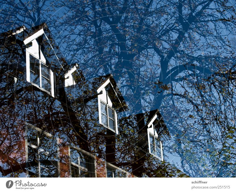 Blue Tree Plant House (Residential Structure) Window Facade Roof Branch Manmade structures Tree trunk Beautiful weather Double exposure Ecological Dormer