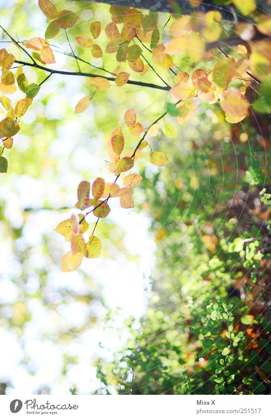 Autumn Nature Beautiful weather Plant Tree Bushes Leaf Growth Bright Autumnal Branch Twig Twigs and branches Colour photo Exterior shot Close-up Deserted Light