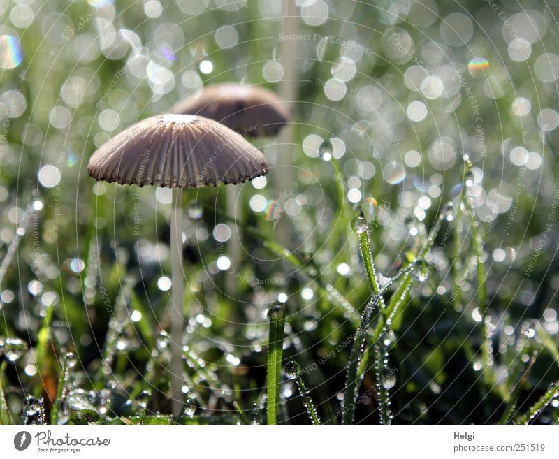 Nature Green White Beautiful Plant Life Meadow Environment Garden Grass Small Brown Wet Glittering Drops of water Esthetic