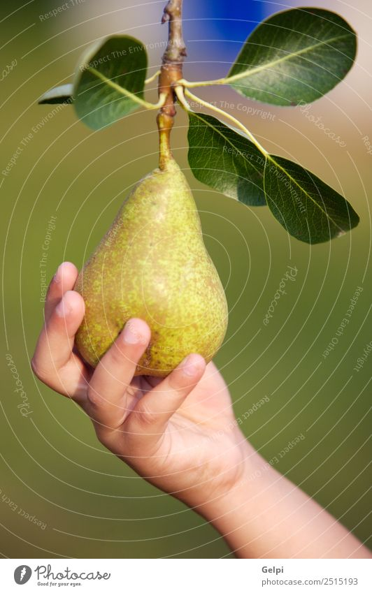 A hand catching a delicious green pear Fruit Nutrition Diet Summer Garden Hand Fingers Nature Landscape Autumn Tree Leaf Fresh Natural Juicy Green Appetite