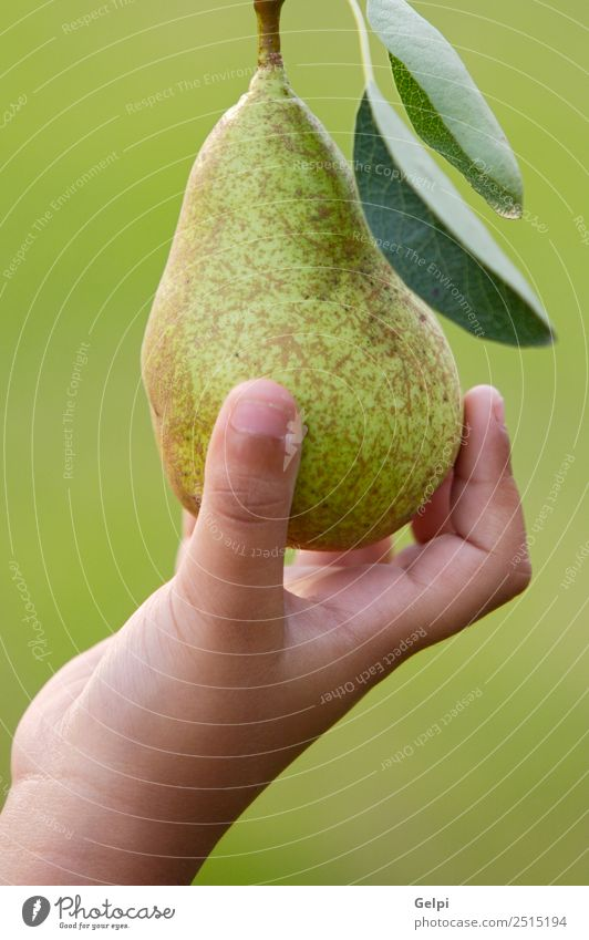 A hand catching a delicious green pear Nature Summer Colour Green Landscape Hand Tree Leaf Autumn Natural Garden Fruit Nutrition Fresh Fingers Farm