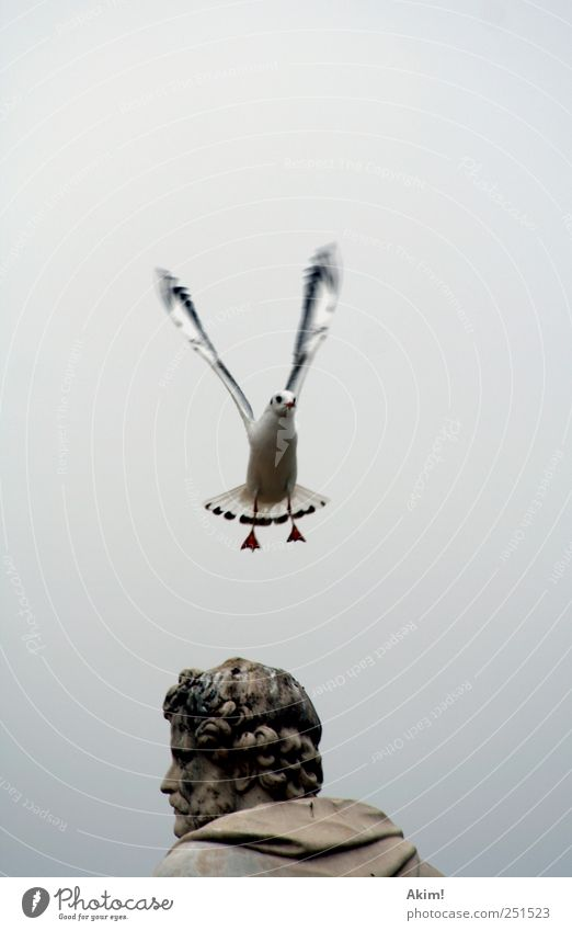 """Departure...next stop """"Middle Ages"""" Sightseeing Art Sculpture Animal Bird 1 Flying Looking Esthetic Gray Silver White Seagull Gull birds Silvery gull Wing"""