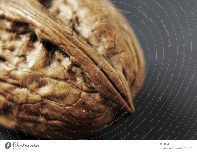 hard nut Food Nutrition Brown Walnut Sheath Kernels & Pits & Stones Hard Colour photo Macro (Extreme close-up) Deserted Copy Space right Shallow depth of field