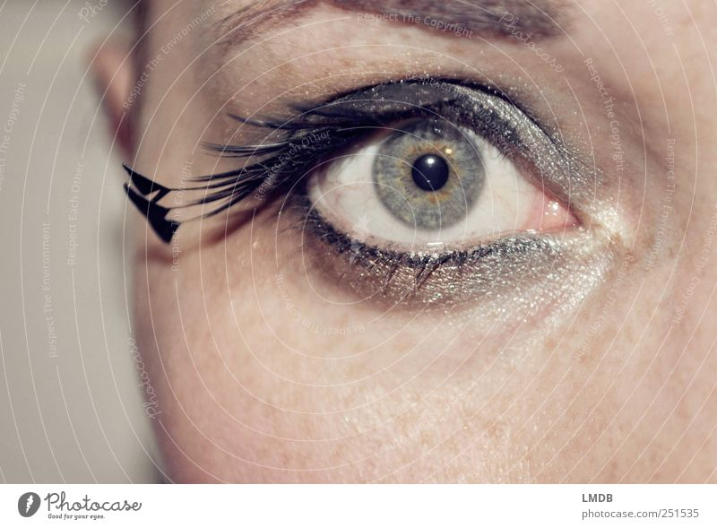 Peacock Eye Style Beautiful Face Make-up Mascara Human being Feminine Eyes 1 Esthetic Glittering Black Silver Cool (slang) Desire Curiosity Surprise Conceited