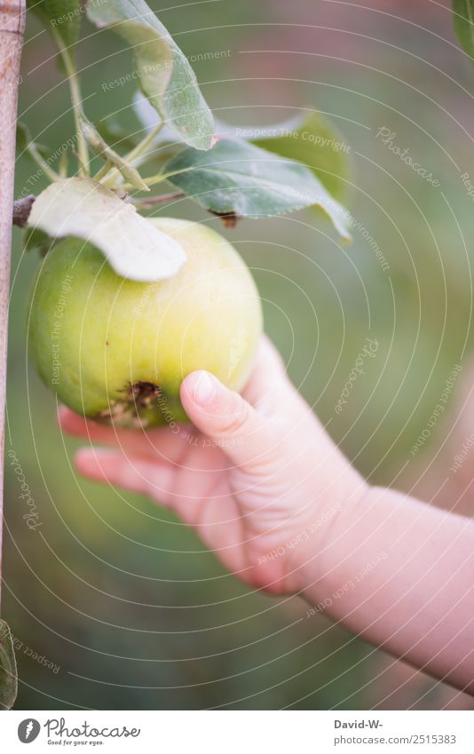 On the way in the garden V Food Fruit Apple Nutrition Parenting Human being Child Baby Toddler Infancy Life Hand Fingers 1 Environment Nature Summer