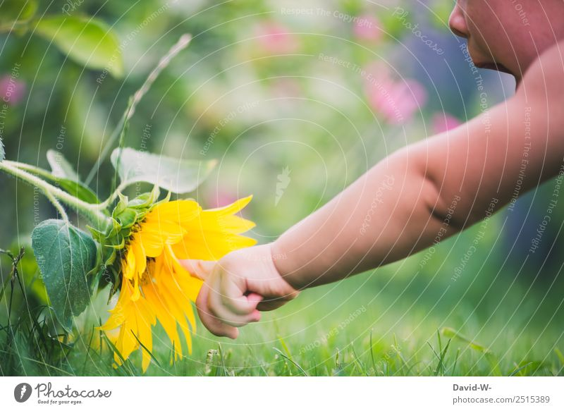 Child Human being Nature Summer Plant Flower Girl Life Environment Blossom Boy (child) Garden Open Infancy Beautiful weather Fingers