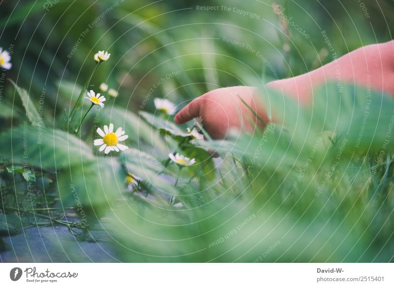 Child Human being Nature Plant Beautiful Green Hand Flower Life Environment Meadow Garden Flat (apartment) Infancy Beautiful weather Fingers