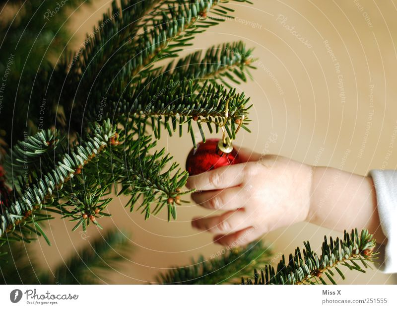 anticipation Child Toddler 1 - 3 years Glittering Red Fingers Fir needle Christmas tree Christmas decoration Decoration Branch Twig Glitter Ball Hang up